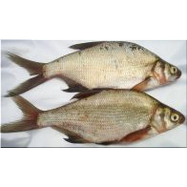 "Bream Large (2 per pk 8-10"")"