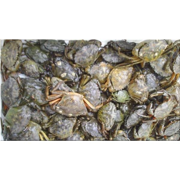 Crabs Live English peeler 100